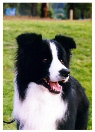active dog games, active dog treats, active dog training, dog excercise, dog parties dog health