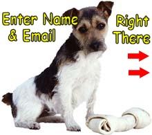 Dog Health Advice newsletter